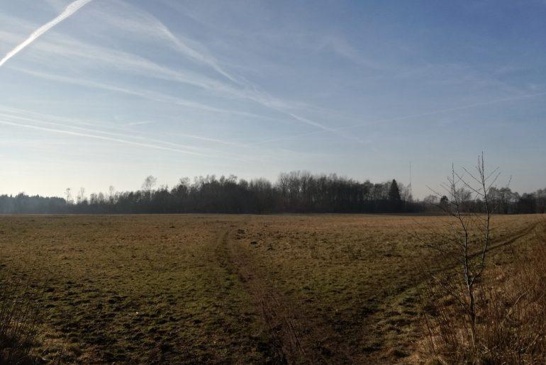 Trampelpfade im NSG Höltigbaum