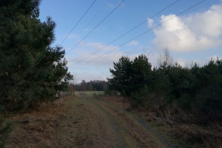 Langsam wird der Feldweg zum Waldweg