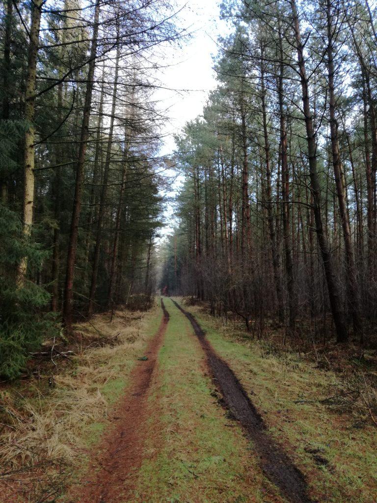 Morastiger Waldweg unter den Füßen und Harzgeruch in der Nase