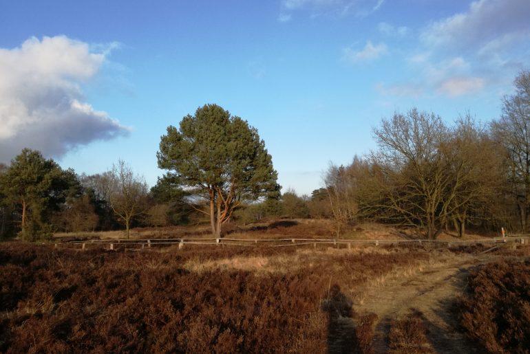 ...dann vom Rostbraun der Heide über das Dunkelgrün der Bäume zum strahlenden Blau des Himmels!