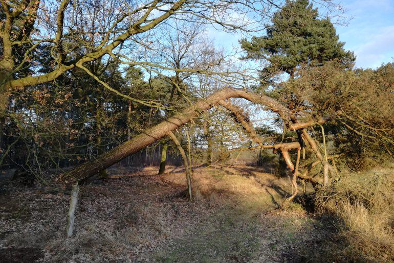 Ein umgeknickter Baum versperrt den halben Weg