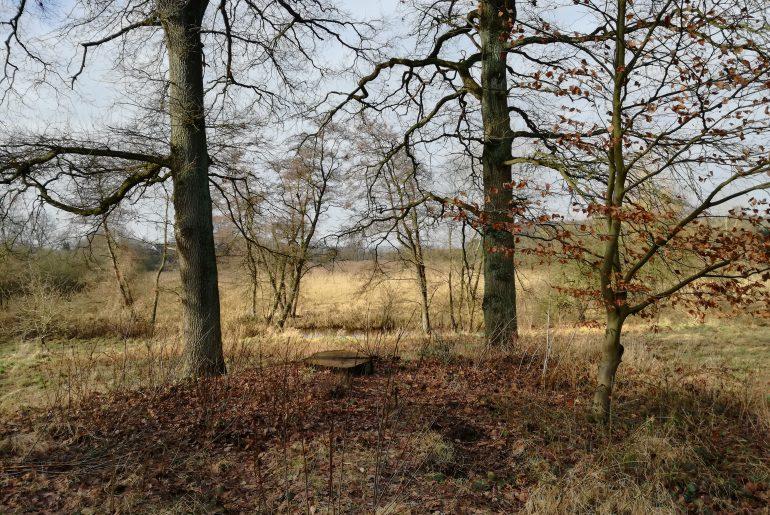 Bäume und Laubwiesen