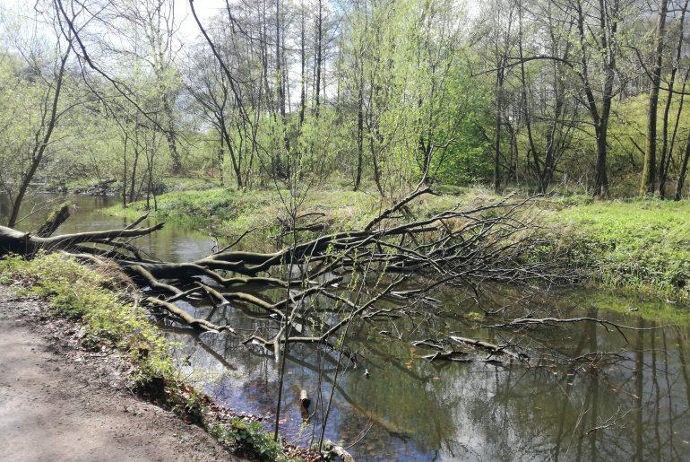 ...und Bäume als Biotop