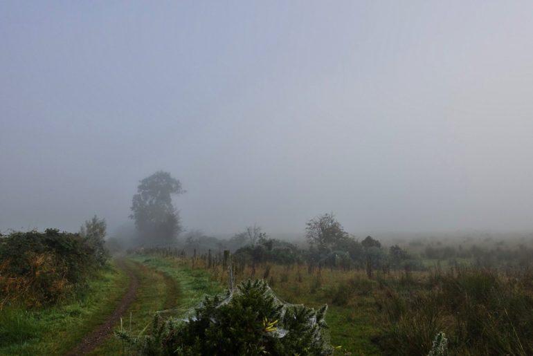 Nebel auf den Feldern östlich von Drymen