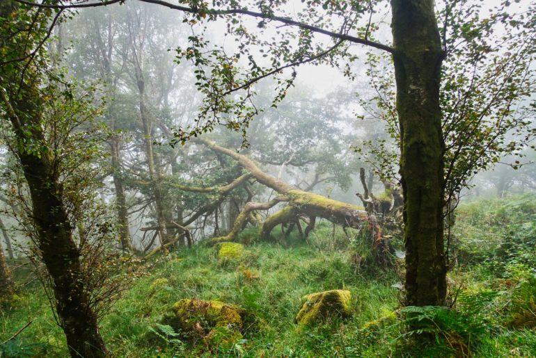 Frühnebel und Moos in den Wäldern
