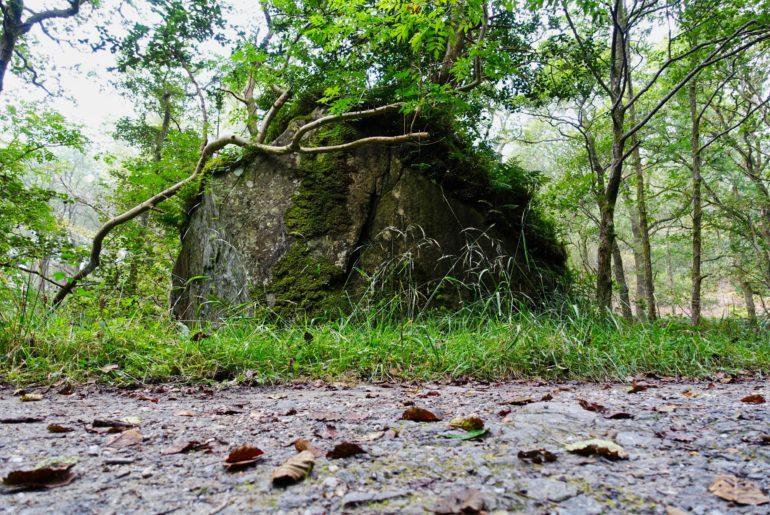 Totholz...Wohnraum für hunderte Arten