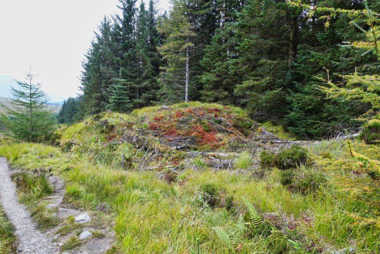 Wald und Heidelandschaft in einem