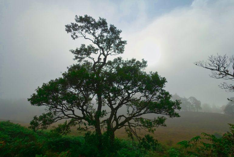 Baum im sich auflösenden Frühnebel