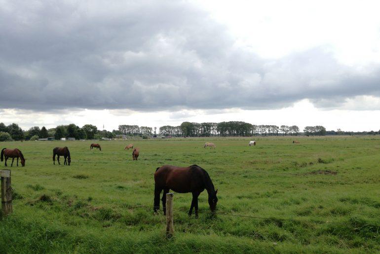 Pferde direkt am Mittleren Landweg