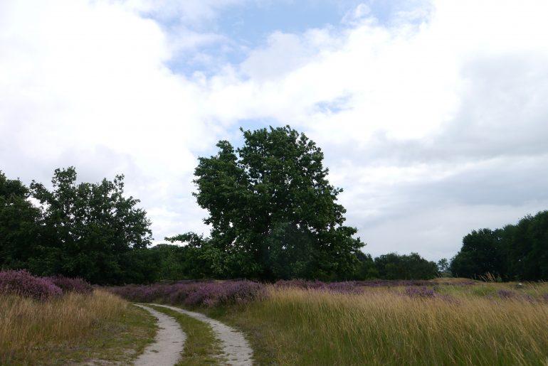 Pfade führen durch die Heide