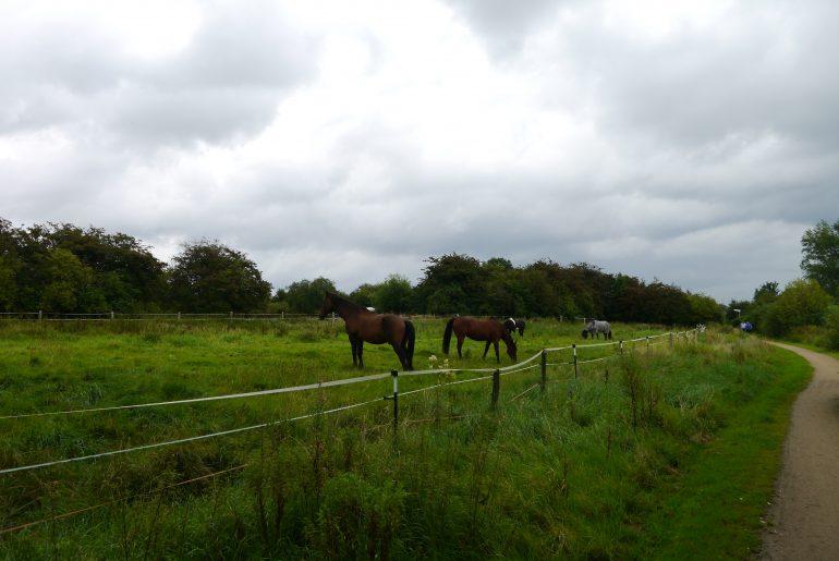 Zum Abschluss nochmal Pferde