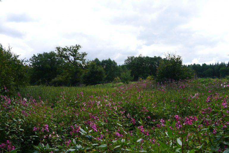 Wunderschöne blühende Wildwiesen...