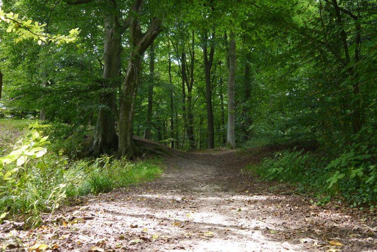 Naturbelassene Wege laden zum angenehmen Wandern ein