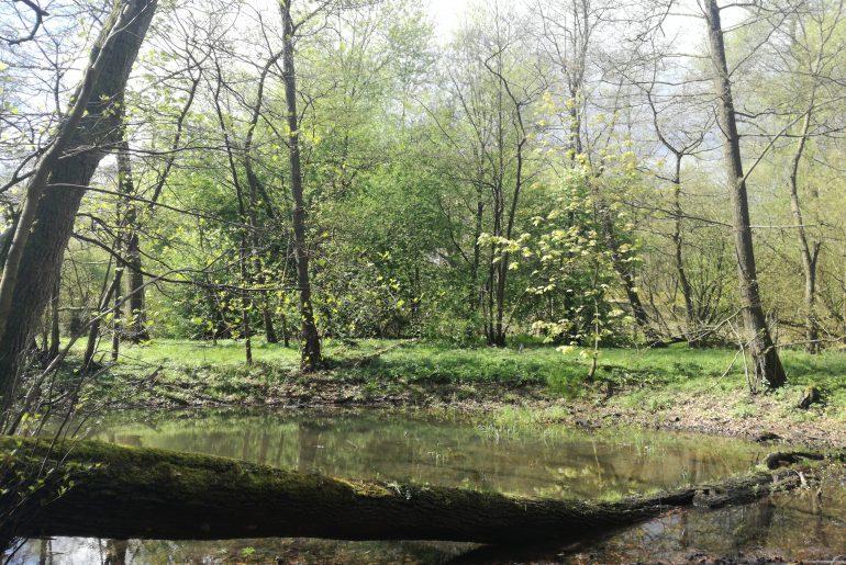 Bruchholz wird nicht beseitigt, sondern bleibt Teil des Ökosystems