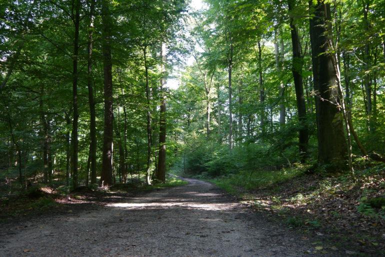 Mal schmal, mal breit ziehen sich die Wege durch das NSG Wohldorfer Wald