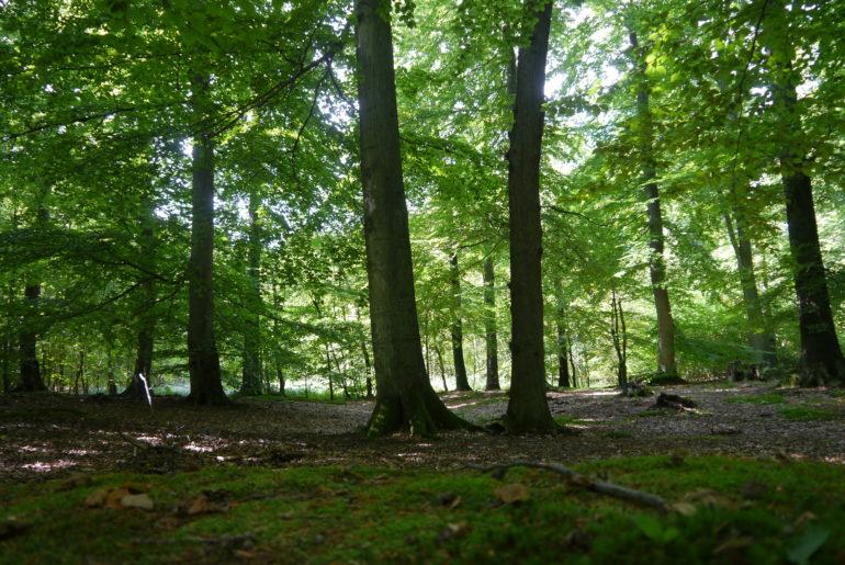 Links der Straße offener Wald...