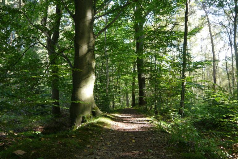 ...wird zum Deich im Wald