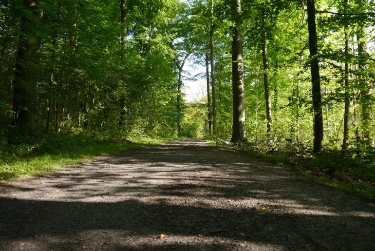Gepflegte Waldwege vor und nach dem Friedhof