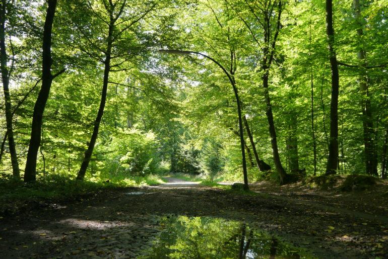 Natur vs. Kopfsteinpflaster