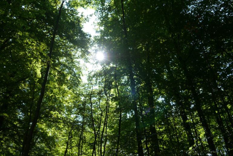 Lens-Flare - die Sonne bahnt sich Ihren Weg in den Wohldorfer Wald