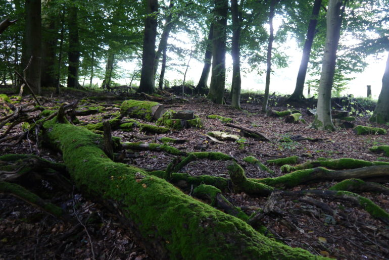Moosbewachsenes Totholz, wunderschön und Lebensraum für allerlei Getier