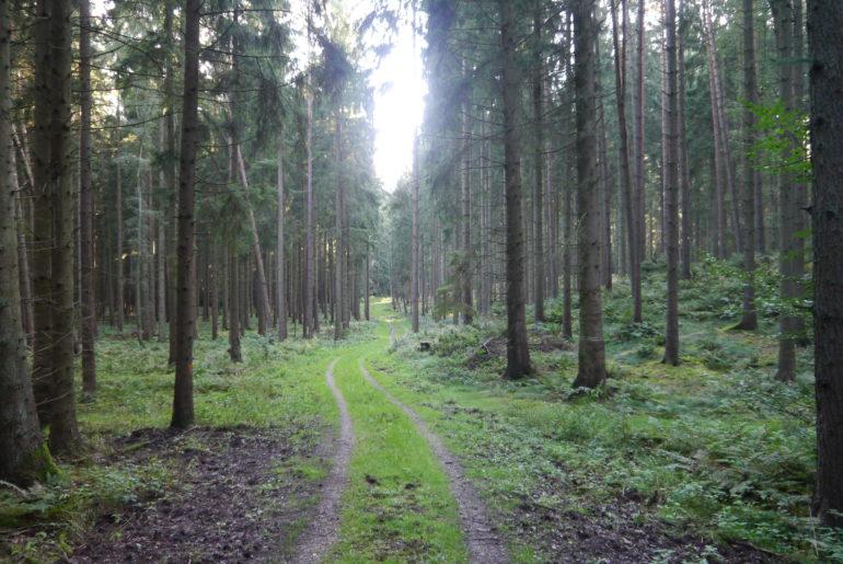 Wirtschaftsweg durch den Buchenwald