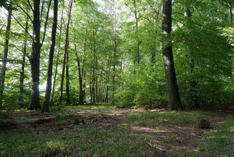 ...und letztendlich wundervoller, natürlicher Waldboden!