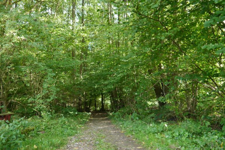 Wieder hinein in den Wald
