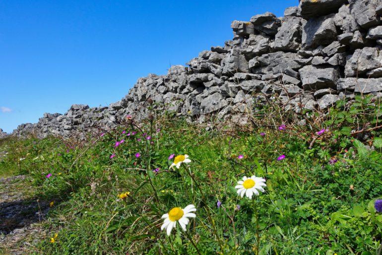 Eine der unzähligen Steinmauern